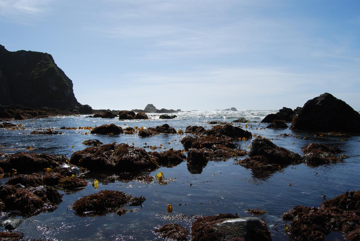 TidePoolTours (7)